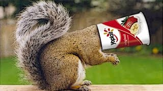 [Awesome squirrel's head stuck in yogurt cup ! ! !] Video