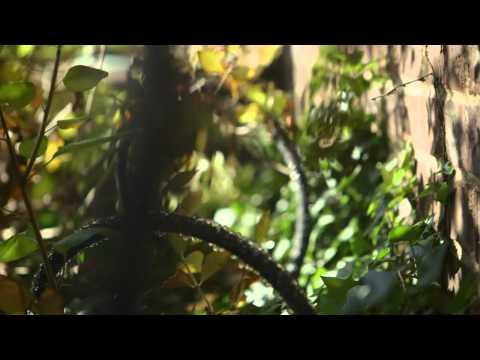 """Eduardo Torrealba's """"Plant Link"""" - winner of the 2013 Lemelson-Illinois Student Prize!"""