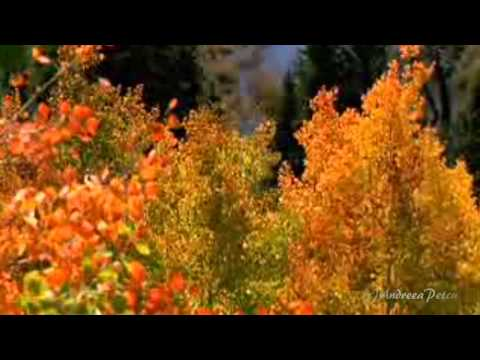 BOGDAN ALIN OTA - Story of my life(Amazing song and performance)