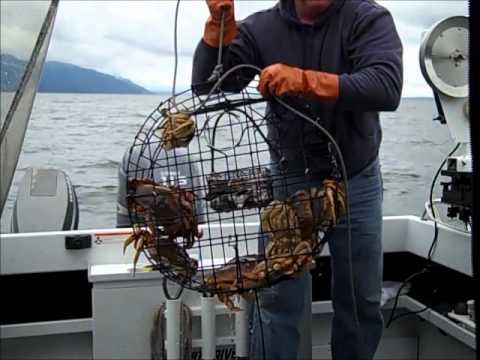 2011 Puget Sound Crabbing 101