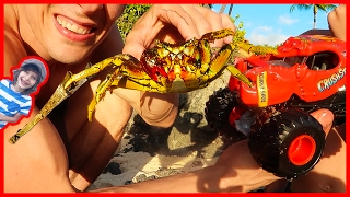 Monster Truck Lobster Vs Real Crab EPIC BATTLE!