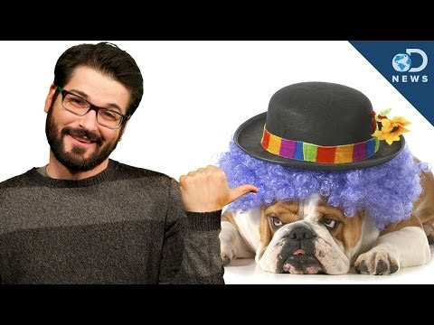 Do Animals Have A Sense Of Humor? video