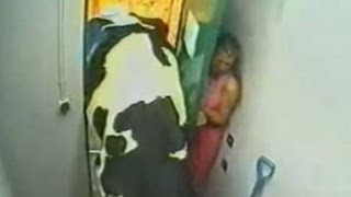 Download Girl Gets Pancaked By A Cow - La Vaca Loca 3Gp Mp4