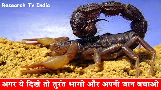 दुनिया के सबसे जहरीले बिच्छू| Most Poisonous and Dangerous Scorpion in the World|Scorpions|Rahasya