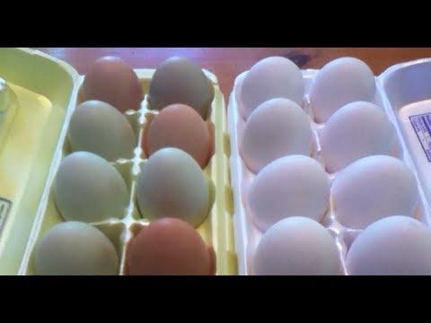Free Range Organic Eggs vs