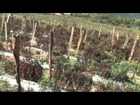 Familias guatemaltecas con escasez de alimentos serán ayudadas por el Gobierno