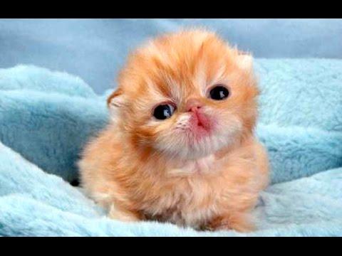 Animals - Beautiful Newborn Child