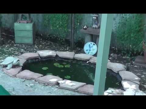 scrub jay pond peace garden zen japan california nature flowers