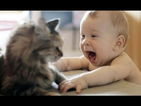 Images of Babies Laughing Babies Laughing at Funny Pets