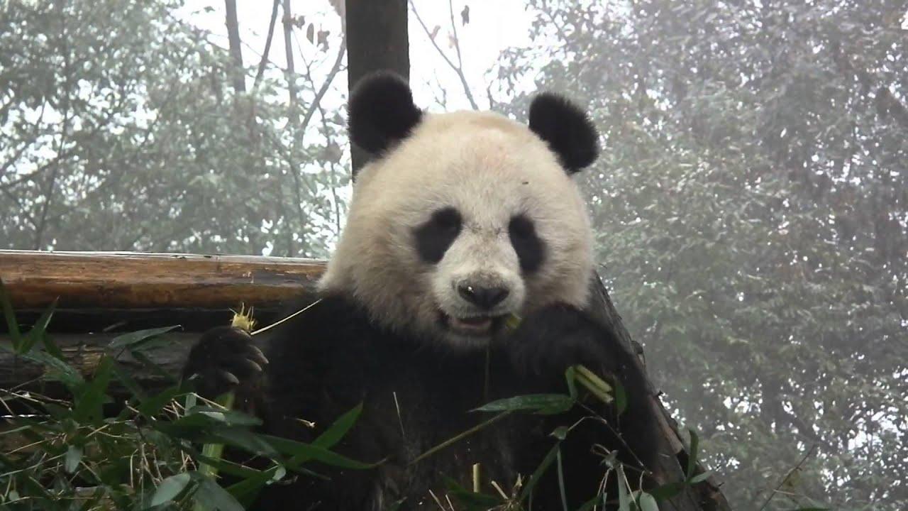 Lin Ping ru Lin Ping(bing at Bifengxia