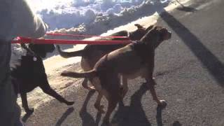Dramatic Change with aggressive dog in minutes- Solid K9 Training