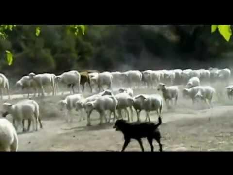 Eram Cem Ovelhas - Neide Ribeiro E Victor Romano - Música Evangélica. video
