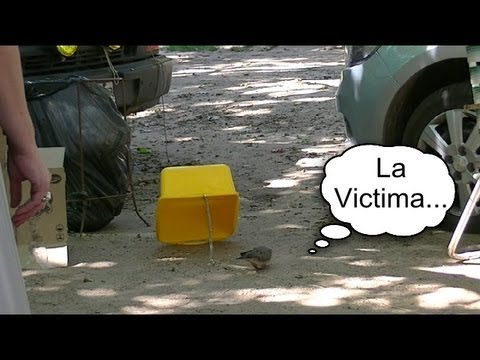 Trampa para pajaros (de emergencia) -  Trap for birds (emergency)