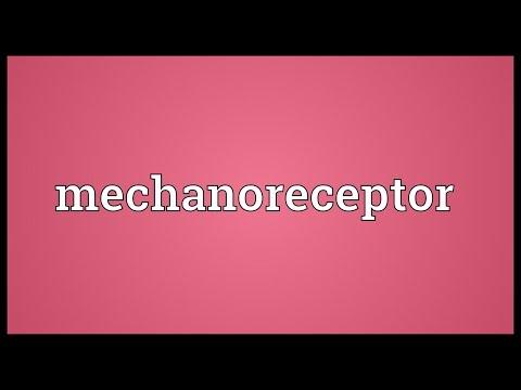 Header of mechanoreceptor