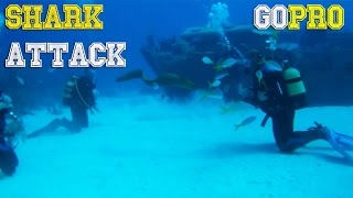 SHARK ATTACKS and diving fails by GoPro [FailForceOne]