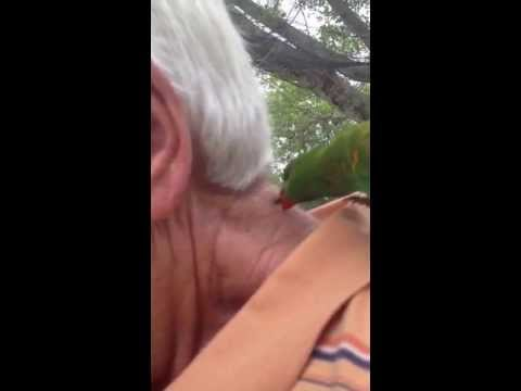 old man getting licked by bird thumbnail