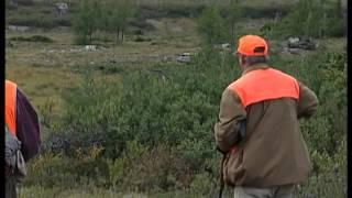 http://sunrisevideo.com/  Boss gun company and Ptarmigan huntingss