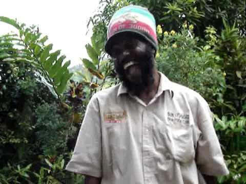 Bob Lives Bob Marley Museum