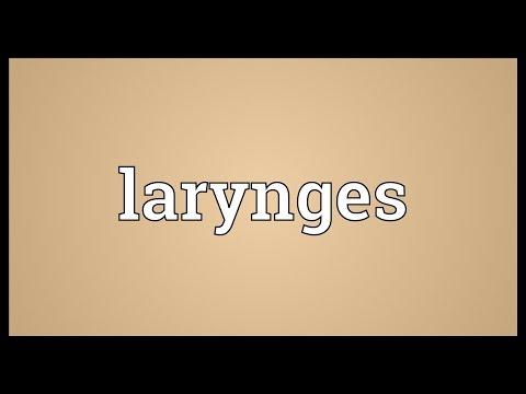 Header of larynges