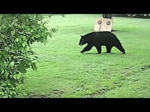 Akron Black Bear