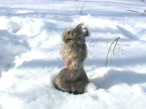 Western Rivers Deceptor Rabbit Decoy
