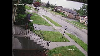 Mailman SKUNKED, then chased him running down block by SKUNKS!