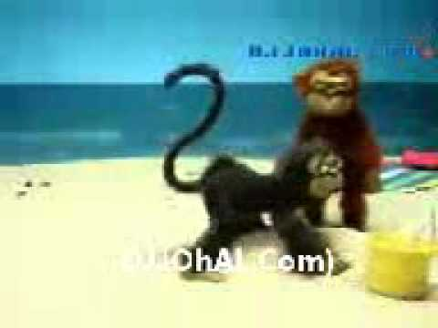 Desi Baandar Punjabi Funny Djjohal Com video