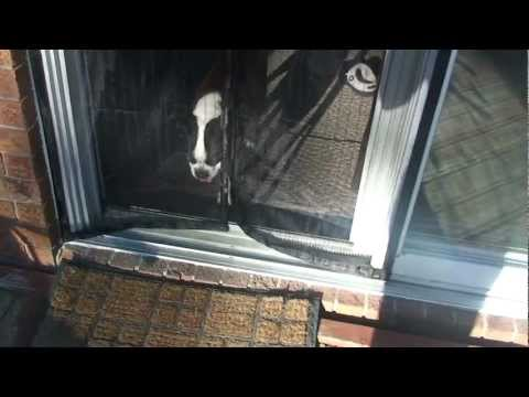 Magic Mesh Screen Door Review Actual User Part