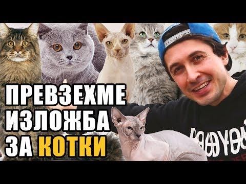 Най-яките котки от ИЗЛОЖБАТА ЗА КОТКИ в София 2017