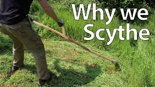 Why we Scythe for Cutting Grass, Mulch and Feed