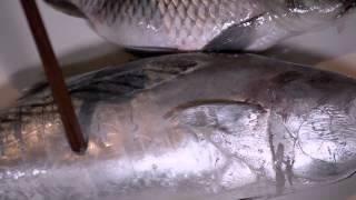 Memilih Ikan | Kiat #024