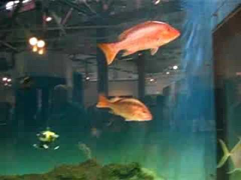 Dauphin Island Sea Lab Estuarium- fish tank