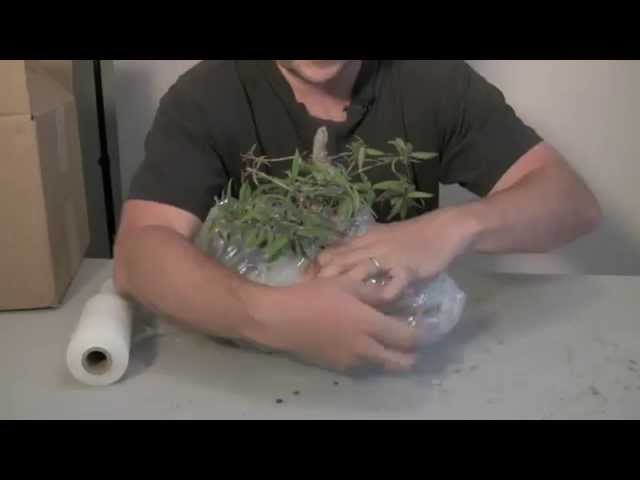 How to Pack & Ship a Bonsai Tree