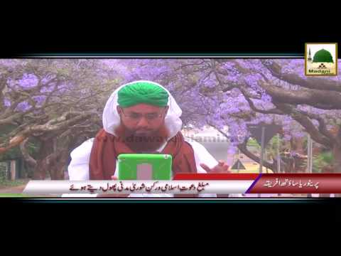 Package 04 - Pretoria South Africa Rukn-e-Shura Kay Madani Phool