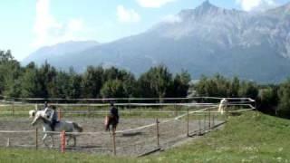 Ecuries de l'Aullagnier, Pension chevaux et poneys