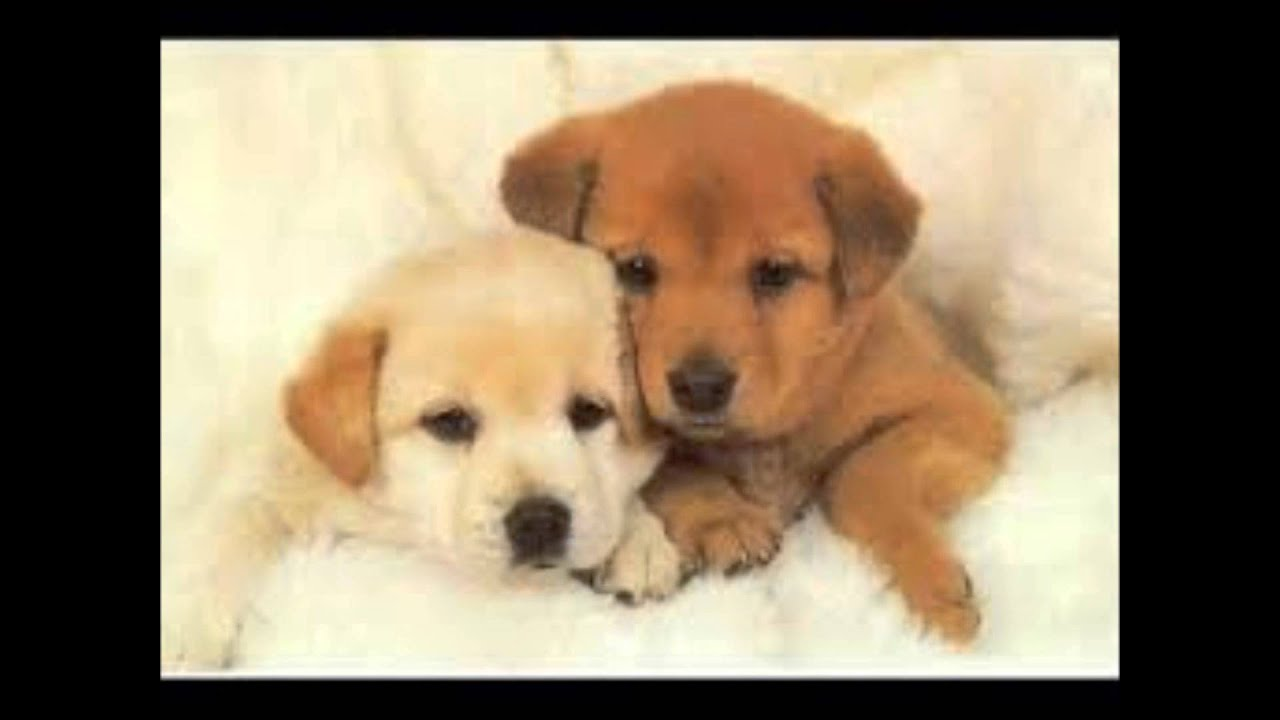 De perritos tiernos bebés - Imagui