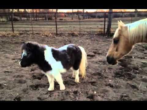 John Hiatt - Ride My Pony