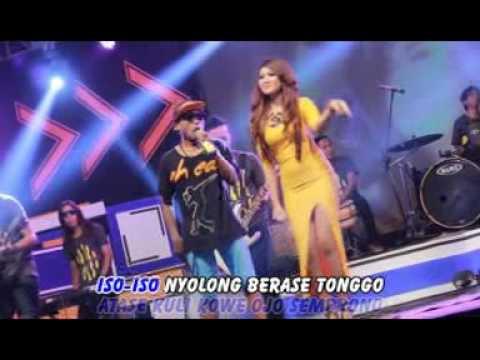 download lagu Kebrojolan Arif Citenk Banyuwangi Popule gratis
