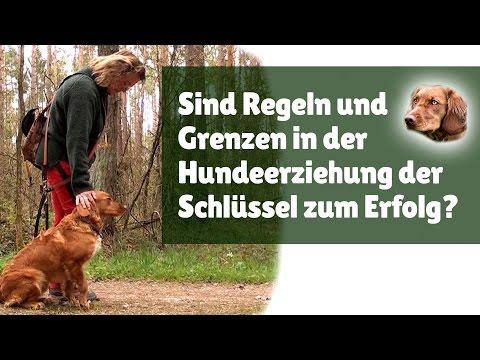 Hundeerziehung ► Sind Regeln und Grenzen in der Hundeerziehung der Schlüssel zum Erfolg?