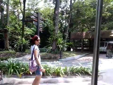 The Tram Singapore Zoo 4