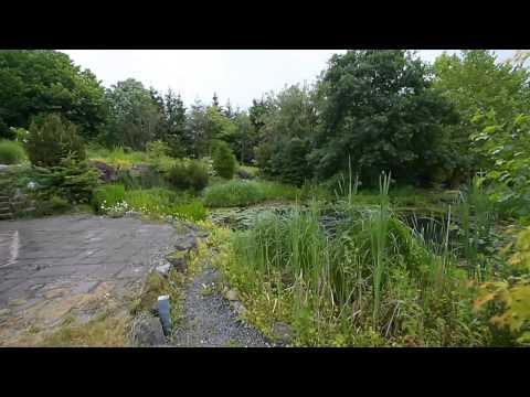 Modern Koi Blog #292 - Traumhafter Naturnaher Gartenteich