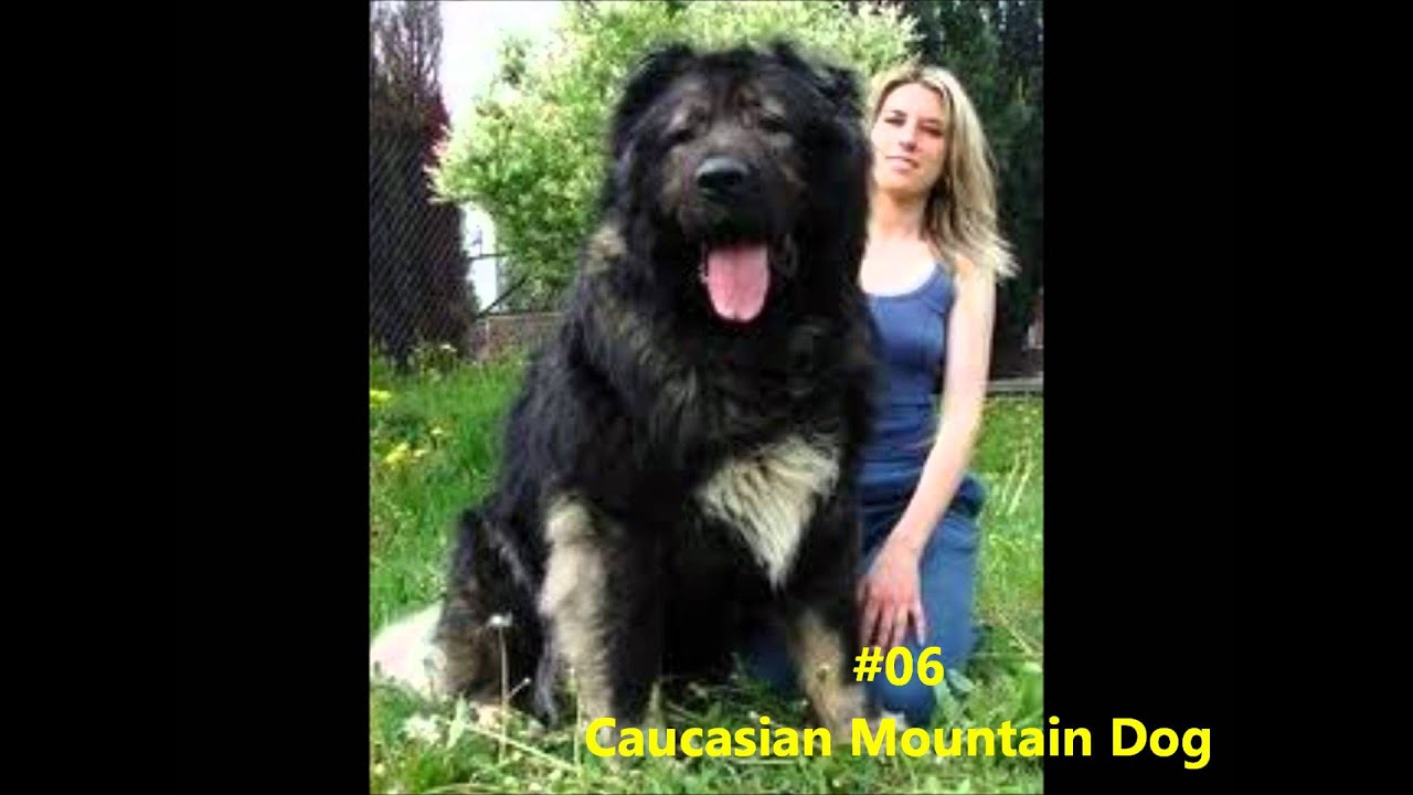 Top 15 favorite dog breeds youtube