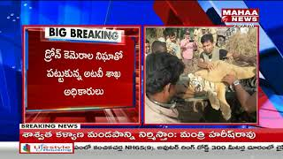 Tigers Tension Clears in Velugodu | Tiger with two cubs spotted