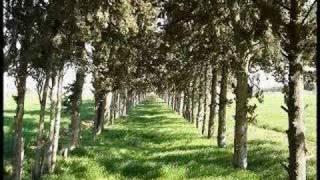 Con đường màu xanh - Lệ Quyên & Lê Hiếu