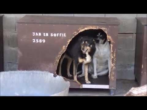 Animalinneed Shelter-Sponsored Dog: Luc 4314