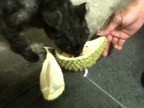 Tigers Eat Durian do Cats Eat Durian