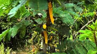 #5575, Arbusto con flores amarillas [Raw], Plantas, árboles y arbustos