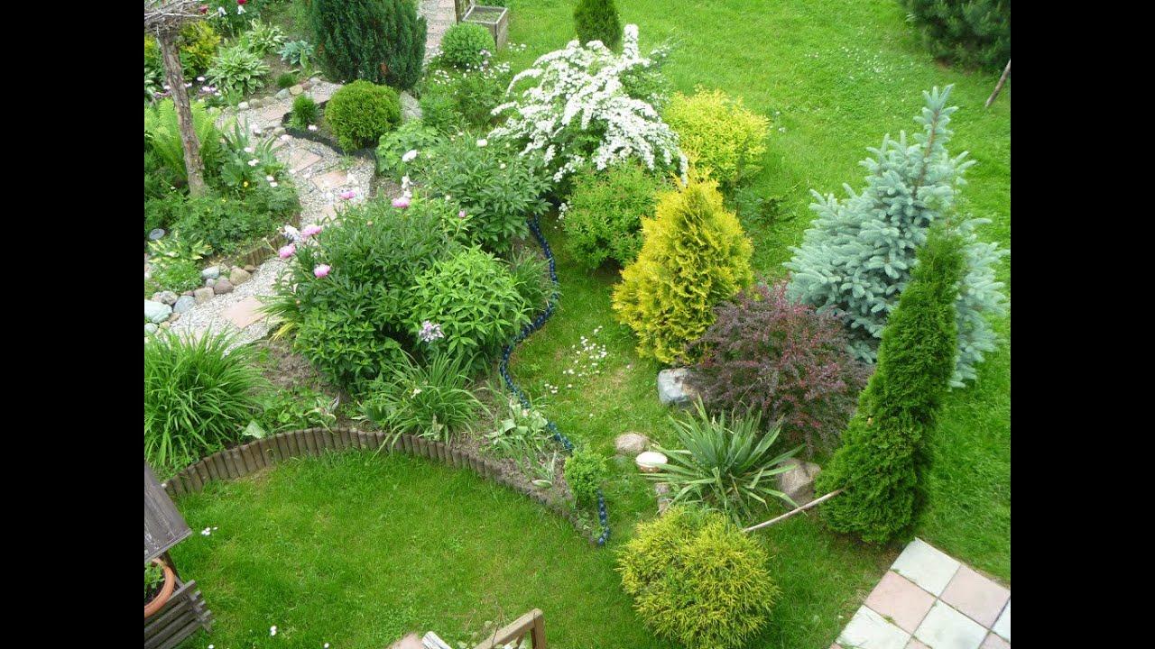 Почвопокровные растения дизайн