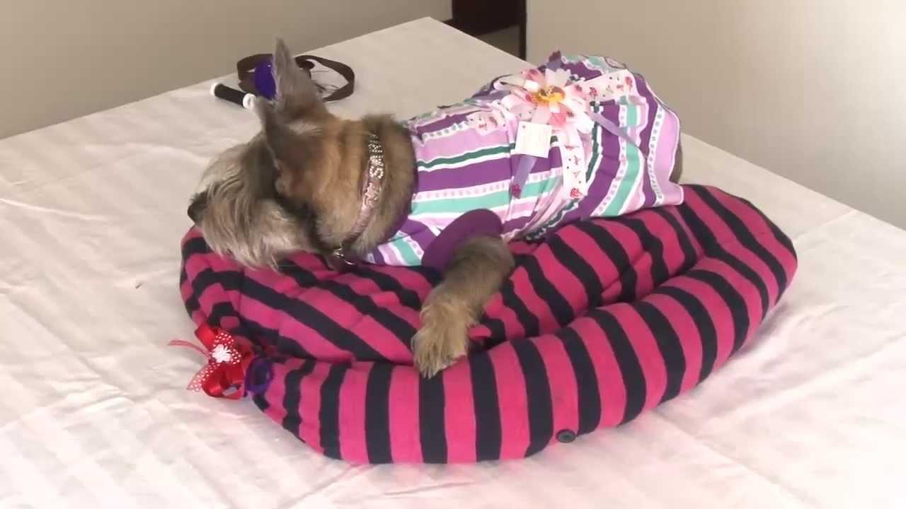 C mo hacer una cama para tu perro o gato animales en - Como hacer una cama para perro ...