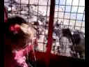 Wonder wheel scream Video